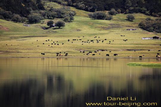 Người-Tây-Tạng-đang-chăn-thả-yak-cừu-và-ngựa-của-họ